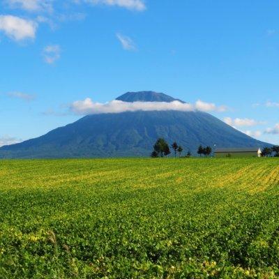 Mt Yotei, as beautiful wearing green as she is wearing white.