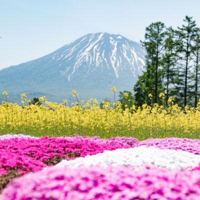 Mr Mishima's annual Shibazakura Garden, just one of countless summer photo spots.