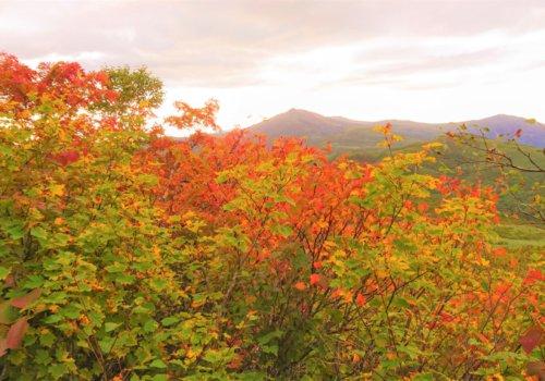 Mt Shirakaba Shakunage Numa Hike Autumn Leaves