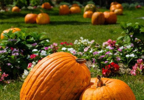 ハロウィンかぼちゃとお庭